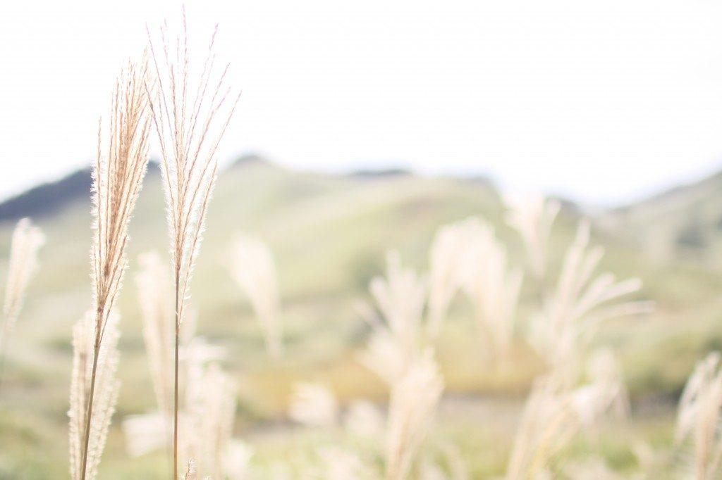 秋の砥峰高原はススキの大草原。眺め最高の展望台まで2時間かけて歩いてみた。