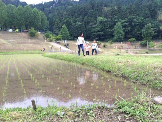 初夏の小川で川遊び。湯の原温泉オートキャンプ場