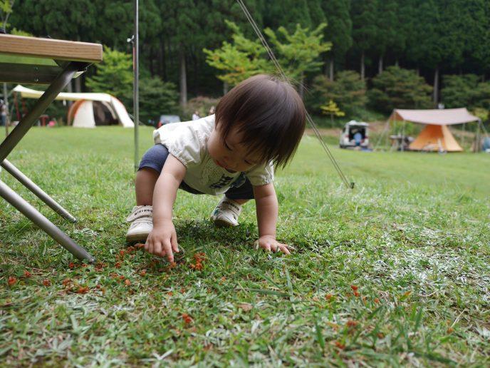 久々のフォレストステーション波賀。草原で秋キャンプを満喫。