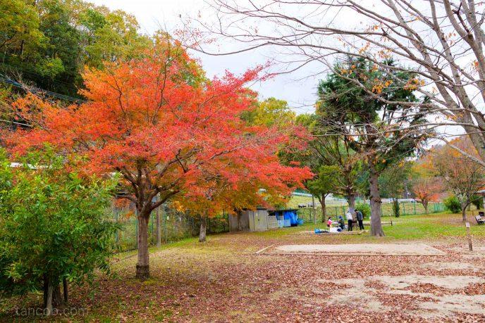 秋真っ盛り。知明湖キャンプ場でほっこり紅葉デイキャンプ。